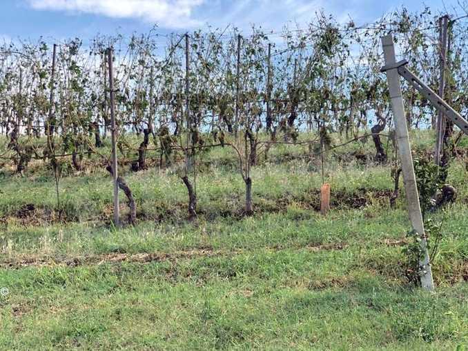 vigne grandinate sito