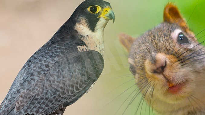 A Ferragosto il Parco safari di Murazzano propone due incontri per conoscere predatori e rapaci