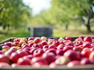 Frutta e innovazione: la provincia di Cuneo si ritaglia un ruolo centrale