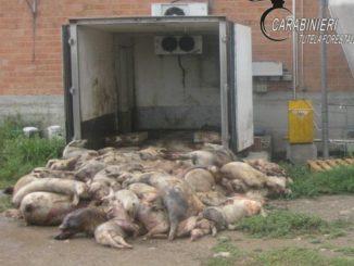 Maltrattamenti di animali in un allevamento a Fossano: i forestali denunciano la proprietaria 1