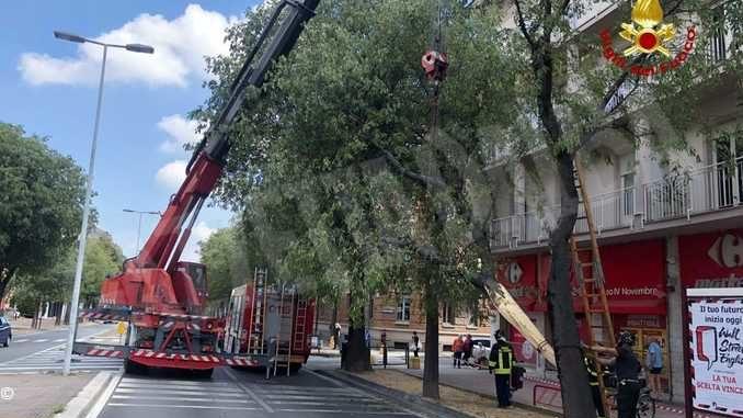 Camion urta un albero a Cuneo e lo abbatte: illesi i passanti i passanti