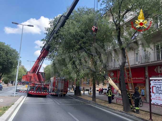 albero abbattuto Cuneo