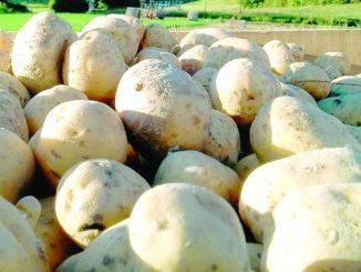 Il consorzio della patata dell'Alta Valle Belbo avrà una nuova sede