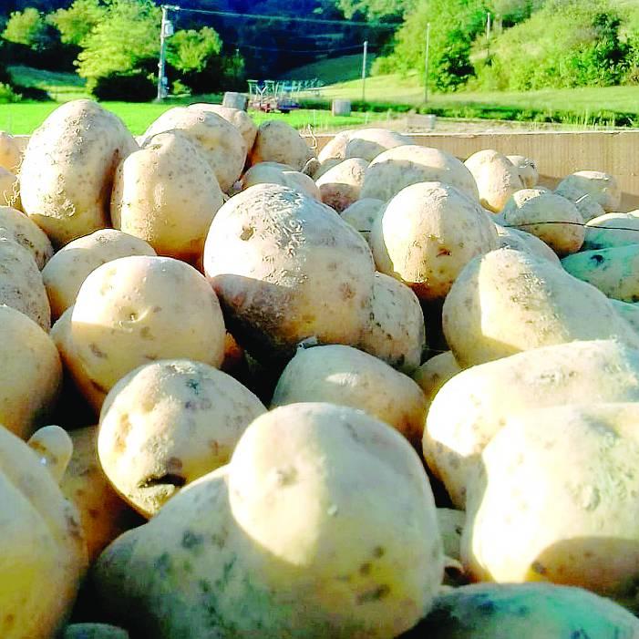 patata valle belbo 2021