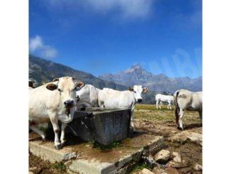 Meeting a Staffarda sulla filiera lattiero-casearia nel Parco del Monviso