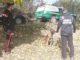 I Carabinieri forestali di Asti ispezionano i boschi di San Marzano alla ricerca di esche